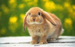 Кролики - Энциклопедический Фонд
